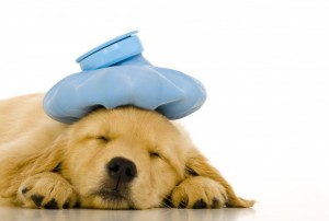 Wallpapers-HD-sick-dog-download-620x417
